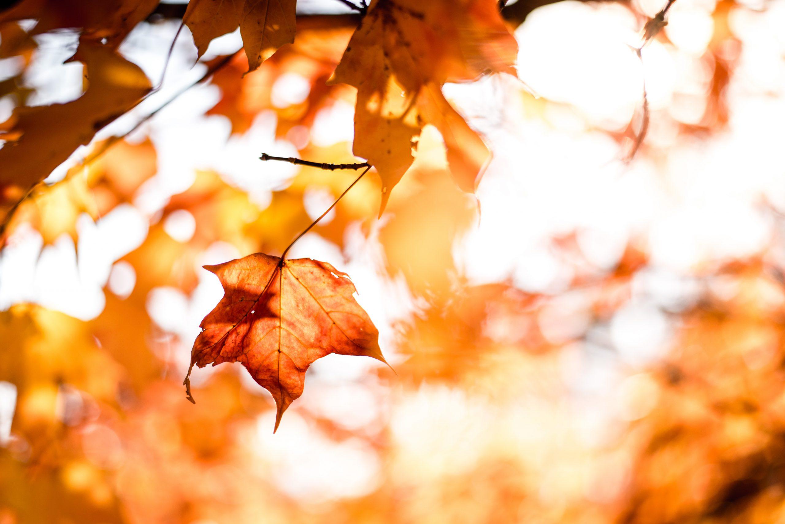 Co robić jesienią – miejsca, które warto odwiedzić